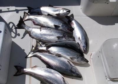 Bamfield West Coast Fish July 24 09 019